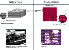 Comparison of natural and synthetic nacre.