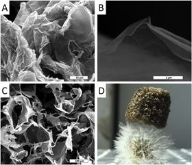 (A) SEM micrograph of as synthesized GO, (B and C): SEM micrographs of GO-PEG aerogel (GPA) at different magnifications, (D) photograph of a GPA monolith standing on Taraxacum officinalis.