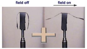 This image shows a selective actuation of the side arms of a soft robot in a horizontal uniform magnetic field. Image: Sumeet Mishra, North Carolina State University.