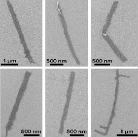 These microscope images show graphene nanoribbons unzipped from multiwalled carbon nanotubes. When their edges are modified with PEG, the nanoribbons provide conductive surfaces for neuronal growth. Image: Tour Group/Rice University.