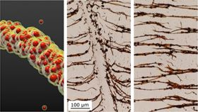 Magnetic nanoparticles encased in oily liquid shells spontaneously form chains on exposure to a magnetic field (left). The chains can be broken (middle) and then re-assembled (right).