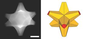 (Left) A scanning electron transmission microscope image of an octopod. (Right) An illustration of the octopod, which has a gold core and palladium at the tips. The scale bar is 50nm. Images: Ringe Group/Rice University.