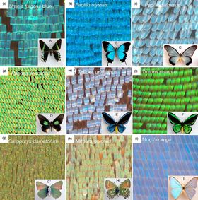 Images of the different scales and colors observed in different species of butterflies.