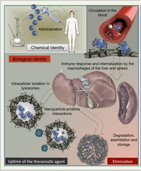 Figure 1.  Schematic view of nanoparticles lifecycle after intravenous administration.