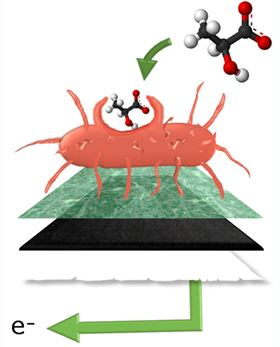 Bacterial fuel cell papers over the cracks