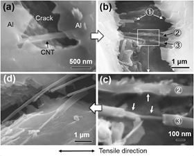 Fracture process of MWCNTs revealed by in-situ tensile tests. (a) CNT acts as bridge curtailing crack growth in the Al matrix. (b, c) CNTs 1, 2, and 3 experiencing different wall fracture processes at different magnifications. Arrows indicate the exposed inner walls. (d) Fractured CNTs on the composite surface after tensile test.