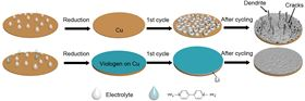 These are illustrations of the design principles for using methyl viologen to form a stable coating that allows the stable cycling of lithium-metal batteries. Image: UC Riverside.