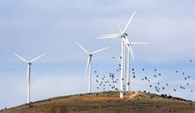 """We don't believe that American tax dollars should be used for corporations who don't follow Federal wind energy guidelines or wildlife and environmental laws,"" says ABC Wind Program Coordinator, Kelly Fuller."
