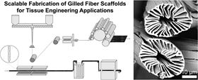 Schematic of gilled fiber scaffold fabrication (from top left): polymer pellets are fed to separate extruders, melted, and forced through a spinnerette; filaments are collected in a bundle and wound onto a collector roll; fibers are crimped into a zig-zag pattern and converted to a tangled web via a series of specialized combed rollers; web structure is locked into place via needle punching using barbed needles entangle the fibers; finally, the material is washed and dried. Scanning electron microscope image of gilled fiber cross-section.