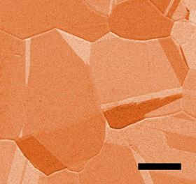 This false-color scanning electron microscopy image shows microscopic details on the surface of a copper foil that was used as a catalyst in a chemical reaction studied at Berkeley Lab's Advanced Light Source. The scale bar represents 50µm. Image: Berkeley Lab.