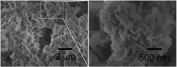 Scanning Electron Micrograph (SEM) images of self-curled coral-like nanoplates  image on the right is enlarged. (Source: Xianbiao Wang et al: Journal of Colloid and Interface Science )