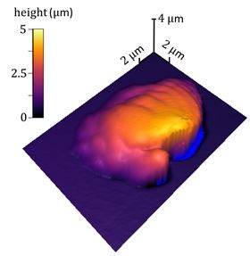 A 3D topographic image of a single voxel of polymerized resin surrounded by liquid resin; the image was produced by NIST's new sample-coupled-resonance photo-rheology (SCRPR) technique. Image: NIST.