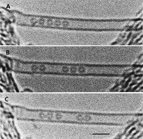 Some of the very first images of fullerene molecules encapsulated in the inner cavity of a single-wall carbon nanotube, so-called 'peapods' denoted C60@SWCNT. This set of images was the first evidence of the capability of encapsulated C60 to freely move within the tube, probably upon ionization phenomena induced by the incoming 100 keV electron beam used to take the transmission electron microscopy images. Reproduced from reference [9].