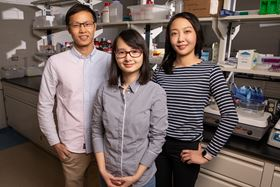 Qian Chen (center), materials science and engineering professor at the University of Illinois at Urbana-Champaign, together with graduate students Binbin Luo (left) and Ahyoung Kim (right), has investigated how order emerges from self-assembling building blocks of varying sizes and shapes. Photo: L. Brian Stauffer.