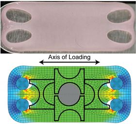 Lab-grown cartilage grown with tension (top) shows similar mechanical and chemical properties to natural cartilage. The lower image shows computer modeling of strain distribution across the artificial tissue. Images: Athanasiou lab, UC Davis.