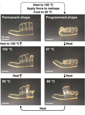 These images illustrate how the polymer hand changes shape depending on the glass transition temperature of the individual layers. Image: Autonomous Materials Systems Group.