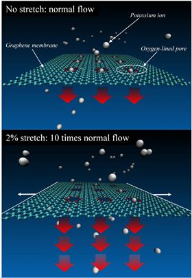 NIST researchers carried out simulations of a graphene membrane featuring oxygen-lined pores and immersed in a liquid solution of potassium ions (charged atoms), which under certain conditions can be trapped in the pores. Slight stretching of the graphene greatly increases the flow of ions through the pores. Image: NIST.