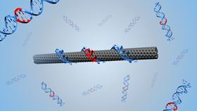 An illustration of a DNA-wrapped single-walled carbon nanotube. Image: Benjamin Lambert, EPFL.