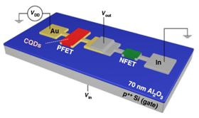 By depositing gold (Au) and Indium (In) contacts, researchers were able to create both n- and p-type quantum dot transistors on the same substrate, opening the door to a host of innovative electronics. Image: Los Alamos National Laboratory/University of California, Irvine.