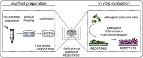 Schematic of PEDOT:PSS scaffold preparation and infiltration with osteogenic precursor cells.