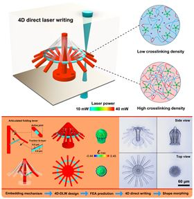 4D direct laser writing (DLW) process and umbrella-like hydrogel structure.