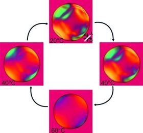 This image sequence shows the reversible shape transformation of a sphere made from liquid crystal rubber; at 20°C, it adopts a folded shape similar to spherical pancakes but turns into a smooth sphere at 60°C, and vice versa. The characteristic colors on the sphere reflect the anti-ordered microscale arrangement of molecules. Image: University of Luxembourg.