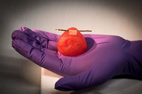 Researchers can attach sensors to the organ models to give surgeons real-time feedback on how much force they can use during surgery without damaging the tissue. Photo: University of Minnesota.