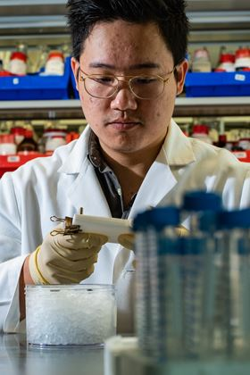 Rice University graduate student Jason Guo fills a mold with the bioactive hydrogel. Photo: Jeff Fitlow/Rice University.