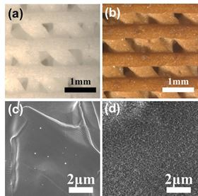 Optical images of 3D-printed bioceramic scaffold (a) and 4mg/mL polydopamine modified bioceramic scaffold (b) on the top view; scanning electron microscopy (SEM) images of pure bioceramic scaffold (c) and 4mg/mL polydopamine modified bioceramic scaffold with a uniformly self-assembled Ca-P/polydopamine nanolayer surface (d).