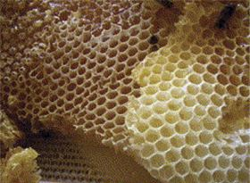 Honeycomb: the wax architecture of bees.