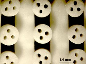 Photo of 3D printed scaffolds for bone tissue engineering.