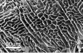 This microscope image shows the high surface area of hexagonal-boron nitride foam glued together with polyvinyl alcohol. Image: Ajayan Research Group/Rice University.