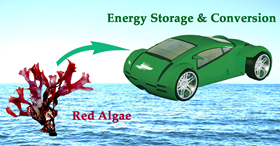 Materials from red algae could build batteries for electric cars. Dongjiang Yang, Qingdao University