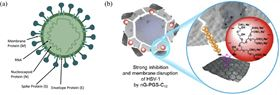 Fig. 1. (a) Main structure of coronavirus, reproduced with permission from [2], Creative Commons Printed with permission from Springer Nature. (b) Representation of HSV wrapping by sulfated graphene derivatives and illustration of long alkyl chain disrupting virus envelope. Reproduced with permission from [21]. Copyright 2019 Royal Society of Chemistry. Printed with permission from the Royal Society of Chemistry.