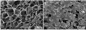 Scanning electron microscopy images of (a) a pristine PEDOT:PSS scaffold and (b) a PEDOT:PSS scaffold where osteogenic precursor cells (MC3T3-E1) were grown  for 7 days. Courtesy of Imperial College London.