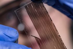 Rice University graduate student Robby Headrick peels a strip of aligned carbon nanotubes from a slide. Photo: Jeff Fitlow/Rice University.