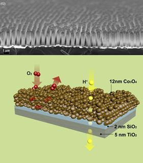 A microscope image (top figure) of the nanotubes, generated in a sheet, and a schematic (bottom image) of the layers that each tiny tube is composed of. Embedded in the silica layer are molecular wires made of short hydrocarbon chains that attach to the cobalt oxide on the inside and connect to the silica-titanium dioxide boundary on the opposite side. These wires conduct charges, generated by light-absorbing molecules at that boundary, across the membrane to the cobalt oxide, enabling water oxidation. Image: Berkley Lab.