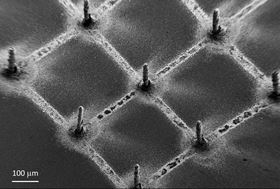 Perovskite pillars printed on a graphene substrate; each pillar defines a pixel for the creation of the image. Image: L. Forró, EPFL.