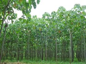 3A Composites has added to its balsa plantations in Ecuador.
