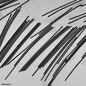 Some of the long gold nanowires grown from nanorods in Eugene Zubarev's lab at Rice University. Image: Zubarev Research Group/Rice University.