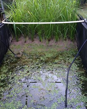 Fig. 1. The freshwater mesocosm. Credit: Steve Anderson.