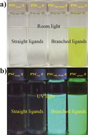 Perovskite nanocrystals dispersed in ethanol under room light and ultraviolet light show better stability when capped with branching ligands than when capped with straight ligands. Photo: Binbin Luo.