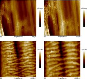 Reorganization of epitaxial structures after annealing at 130 °C. Images on the left are before annealing and images on the right are after annealing. Images at the bottom are smaller scans of the exact same area on the same fiber.