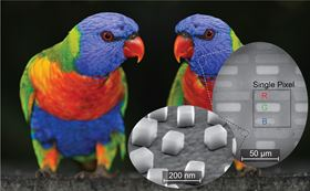 Researchers at Duke University tested a new technique for printing and imaging in both color and infrared with this image of a parrot. The inlays show how a simple RGB color scheme is created by building rectangles of varying lengths for each of the colors, and then the individual nanocubes on top of a gold film that create the plasmonic element. Image: imageBROKER/Alamy Stock Photo.