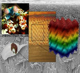 This image shows the herringbone structure of the impact region of the mantis shrimp's dactyl club. Image: UC Riverside.