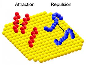 Ligands can attract and help each other adsorb at some surface sites, but can often impair each others efforts as well. Image: Cornell University.
