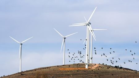 Wind energy industry weathers the storm