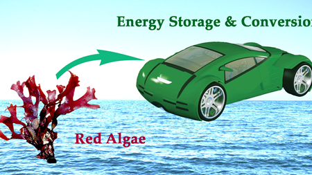 From seaweed to energy storage