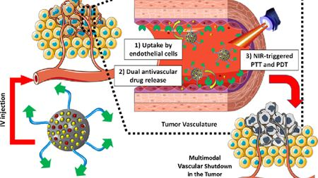 Nanoparticles target tumor's blood supply
