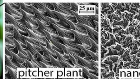 Plant-inspired 'nanowrinkles' too slippery for marine bacteria